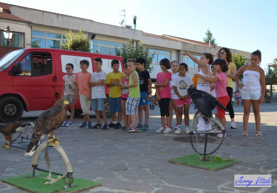 spettacolo-falconeria-2014-1