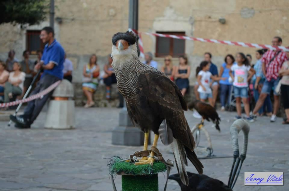spettacolo-falconeria-2014-17