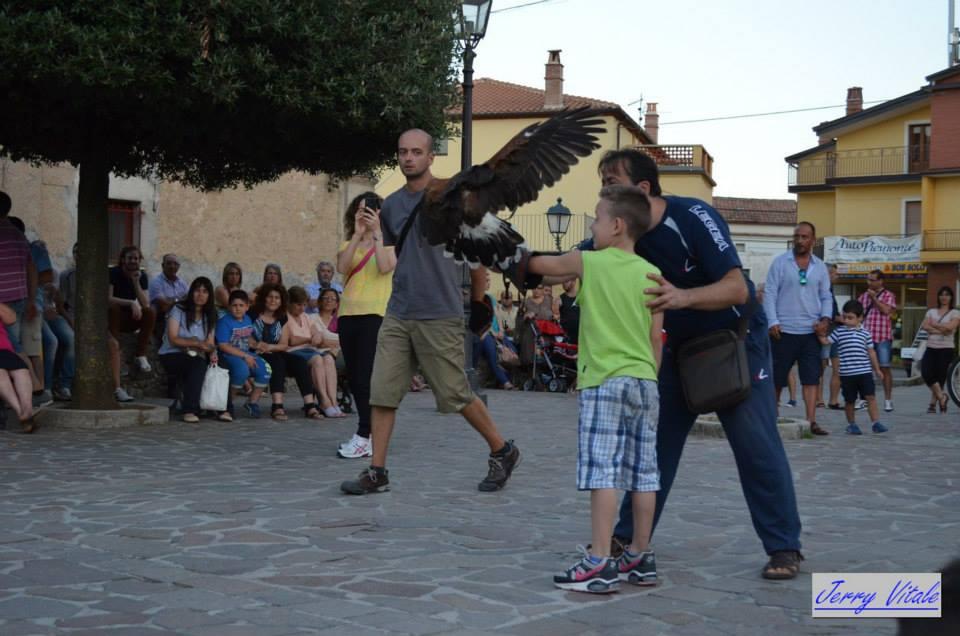 spettacolo-falconeria-2014-29