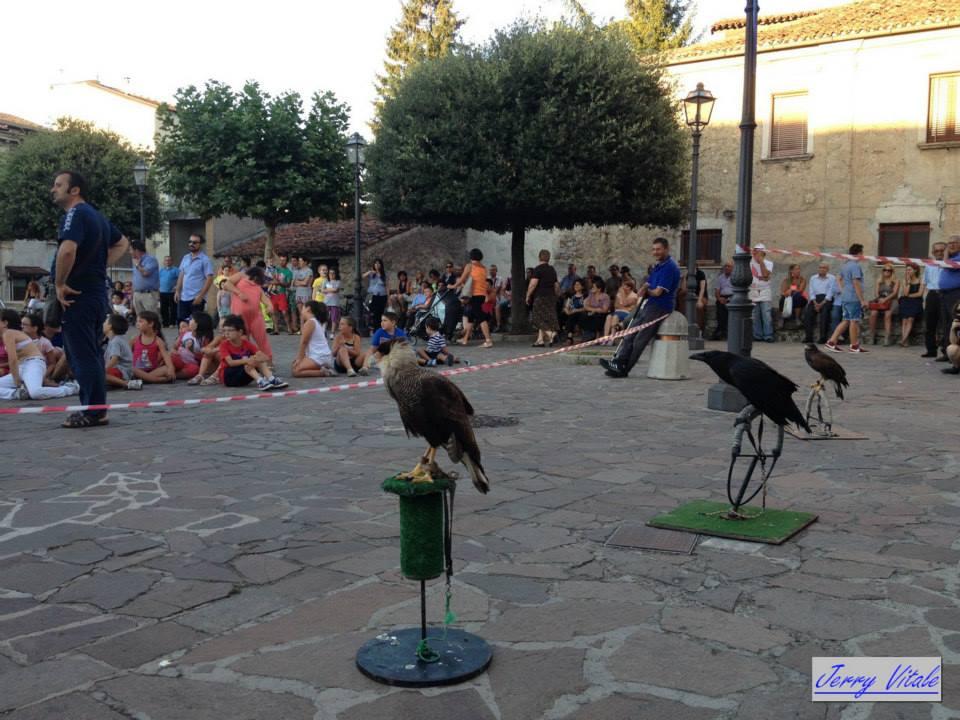 spettacolo-falconeria-2014-3