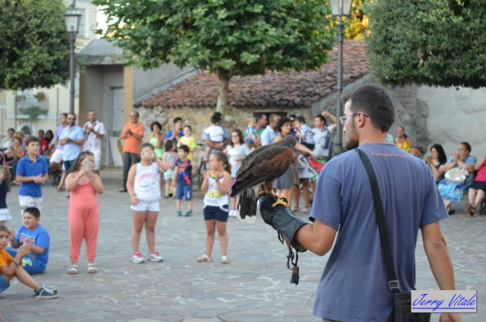 spettacolo-falconeria-2014-7