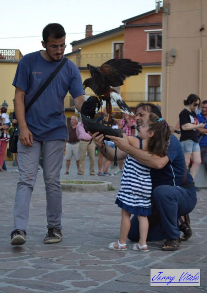 spettacolo-falconeria-2014-8