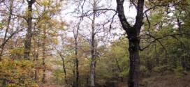 Colori d'autunno di Giuseppe Bartolomeo
